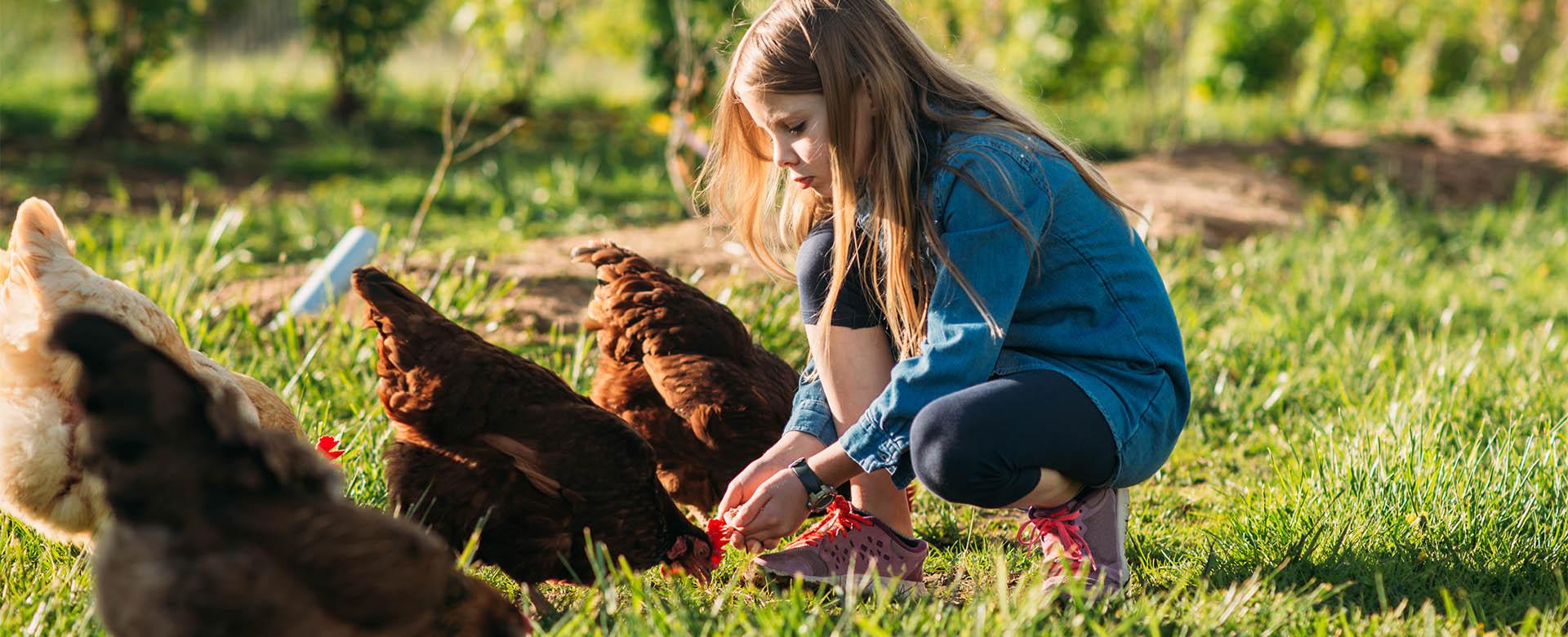 Réunion d'information «Adopte 1 poule»