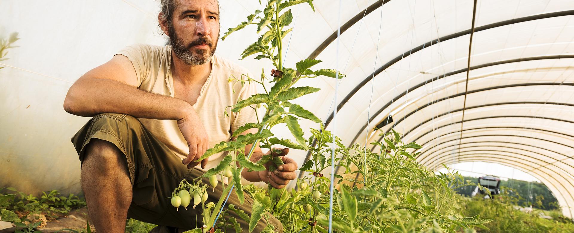 Un pôle d'agriculture biologique pour développer la filière bio