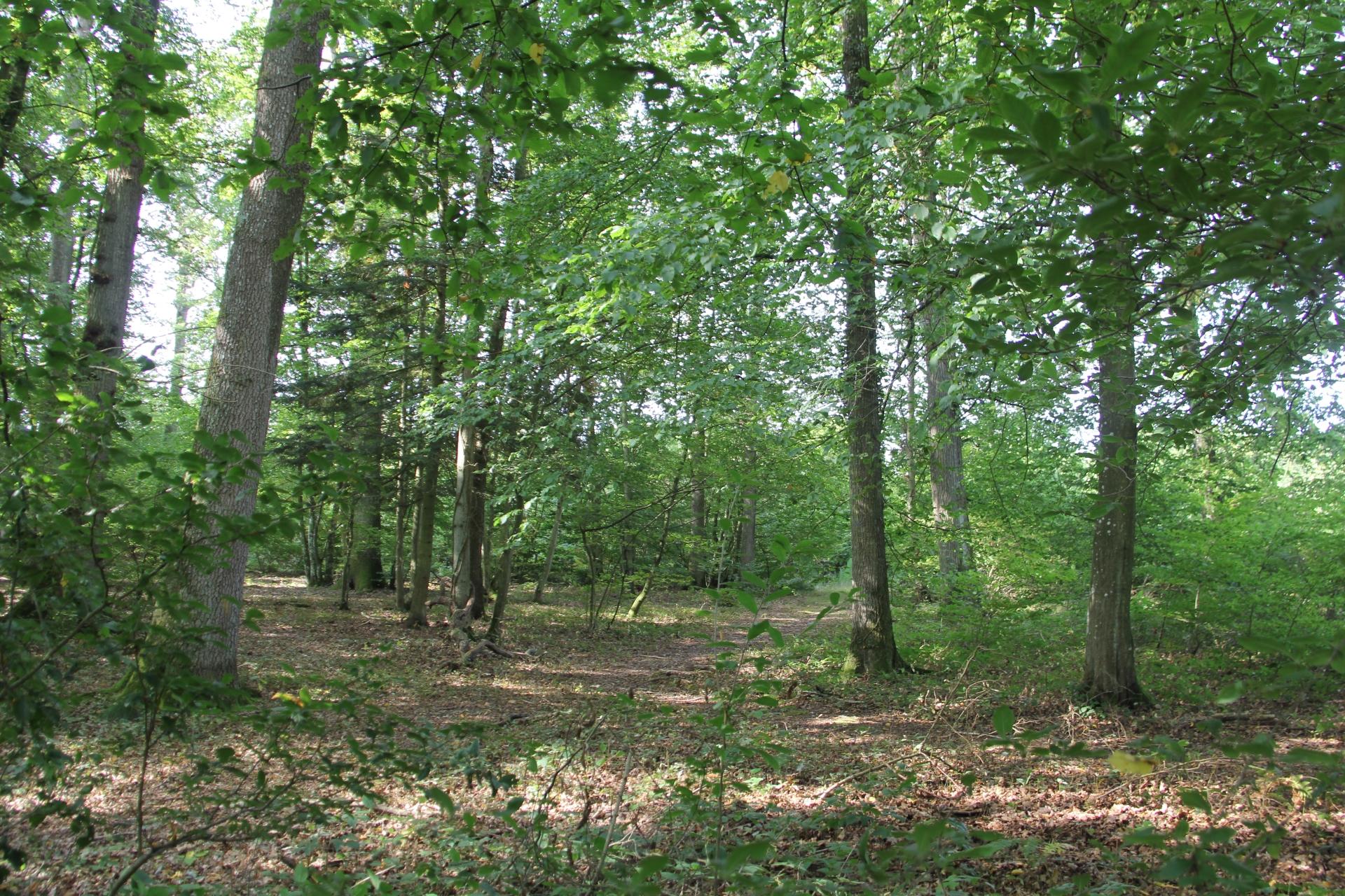 Concertation sous les arbres